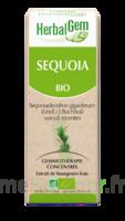 Herbalgem Séquoia Macérat Bio 30ml à ALES